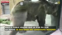 """Rémi Gaillard interpelle Jean-Jacques Annaud sur les conditions de vie de """"l'ours"""" (vidéo)"""