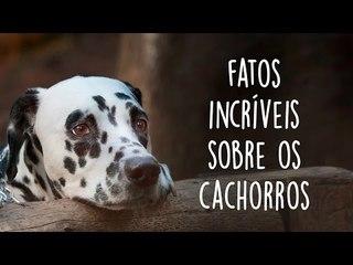 8 fatos incríveis sobre os cachorros