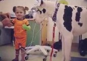'He Likes the Bubbles!' – Great Dane Plays With Little Girl in Hospital