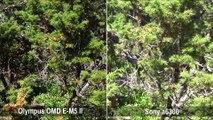 Comparativa de enfoque entre Sony a6300 y Olympus OMD E-M5 II