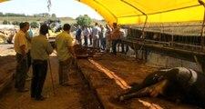 Çadırda Elektrik Akımına Kapılan 14 Kurbanlık Büyükbaş, Telef Oldu