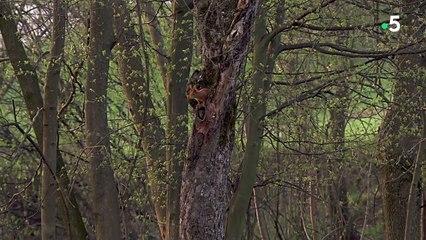 Naissance de bébés écureuils en direct