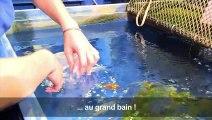 Un refuge pour poissons rouges abandonnés à l'Aquarium de Paris