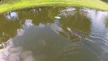 Alligator vs Bateau radiocommandé