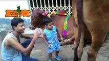 Bakra Eid Animal Voice  Short Cut   Punjabi Totay Funny Tezabi Totay