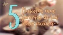 Las 5 MASCOTAS mas famosas de las REDES SOCIALES.....5 most famous pets of social networks!!!