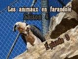 Les animaux en faransole: saison 4: épisode 3