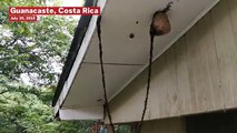 Incredible Moment Army Of Ants Build Bridge To Raid Wasp Nest
