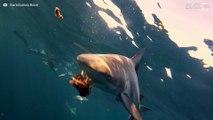 Mergulhador destemido alimenta tubarões