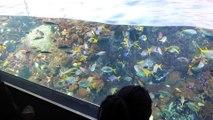 CHATONS , POISSONS GEANTS et PINGOUINS ! Visite de L' AQUARIUM D'OSAKA KAIYUKAN JAPON !