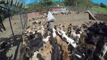 700 Hunde, 800 Katzen: Zwei Frauen schenken Tieren ein Heim