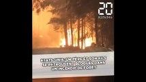 Etats-Unis: Un père et son fils se retrouvent bloqués dans un incendie de forêt