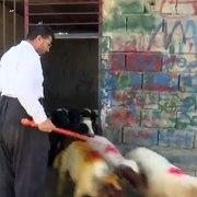 قیمت بز و گوسفند در روز های قبل از