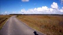 Ce cycliste voit un gros morceau de bois sur la route... C'est en fait un joli crocodile