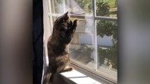 Best of Katzen-Clips