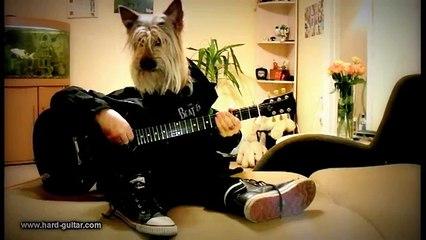 Happy Birthday Rock Song Dog playing guitar Funny Greeting Card Human Dog