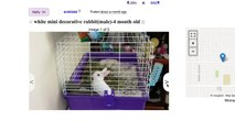 REACTING TO RABBIT ADS ON CRAIGSLIST