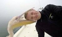 Ce jeune homme s'est fait attaquer par un pélican en plein selfie