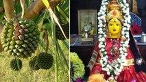 ವರಮಹಾಲಕ್ಷ್ಮಿ ಹಬ್ಬದ ದಿನ ಲಕ್ಷ್ಮಿ ದೇವಿಗೆ ಈ ಹೂಗಳಿಂದ ತಪ್ಪದೇ ಪೂಜಿಸಿ | Oneindia Kannada