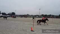 La Province - Sports équestres - Extrait des championnats du monde par équipes des Pony Games à Ghlin (1)