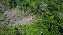 Rare Drone Footage Shows Amazon Tribe in Brazil