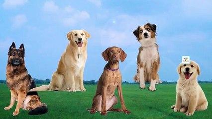 Dog Finger Family Nursery Rhyme | Dog Daddy Finger Song for Kids Baby Learning Videos