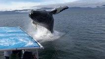 ¡Qué salto! Esta ballena salta fuera del agua cerca de estos turistas