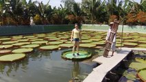 65-kg people standing on a lotus leaf - Người 65 kg đứng trên lá sen - Des gens de 65 kg se tenant sur une fleur de lotus