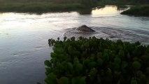 Mais quel est ce monstre marin qu'il découvre dans cette rivière?