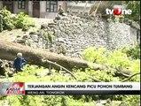 Badai dan Angin Kencang Akibatkan Sejumlah Pohon Tumbang di Tiongkok