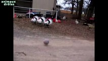 Dindes drôles Football Jouer [HD - très drôle]