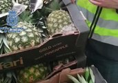 Seven Arrested as Spanish Police Seize Cocaine Hidden in Pineapples