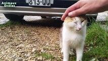 Chat mignon demande à être choyé - mignon et drôle animaux Animaux