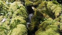 Travel Planet -  Japon salvaje (Wild Japan)