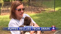 Puppies Rescued from Storm Drain Named After Animal Control Officers Who Saved Them