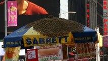 Un essaim d'abeilles géant découvert en plein cœur de New York