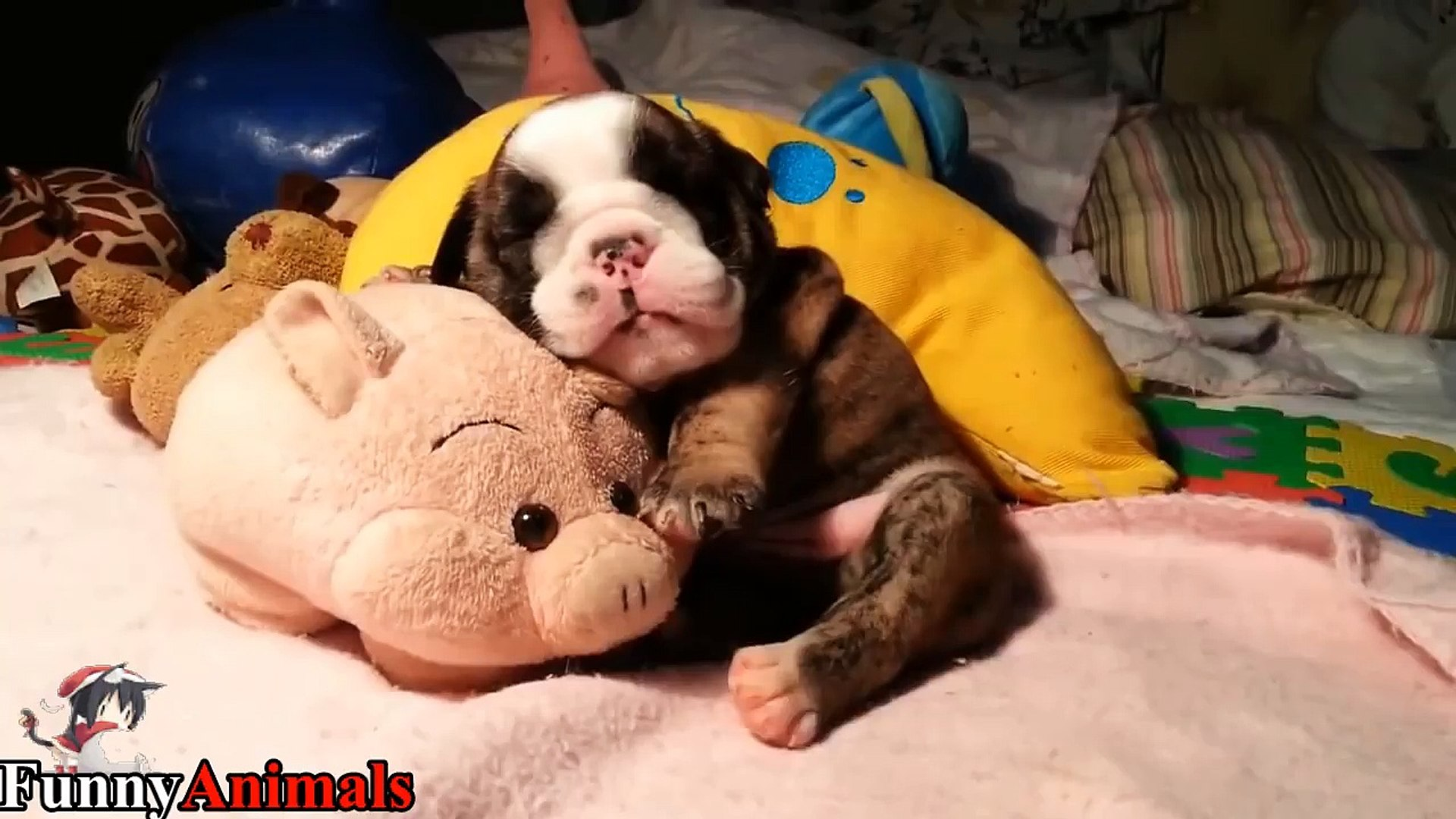 So Adorable Sleeping Puppy Too Cute Cutest Dogs Video Dailymotion