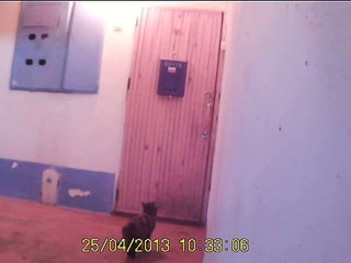 Mačka zvoni