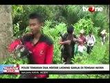 Polisi Nagan Raya Temukan 2 Hektare Ladang Ganja