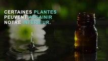 3 plantes pour purifier l'air intérieur