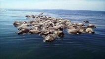 Una red de pesca ilegal mata a 300 tortugas marinas en México