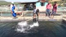 Kahramanmaraş'ta Toplu Balık Ölümleri...vatandaşlar Kılavuzlu Barajı'na Ölü Balık Bırakıldığını...