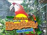 """El Zoológico Nacional necesita ayuda...Y por eso te invitamos a ser parte de la gran caminata con tu mascota: """"Perro Run 2018"""".Te esperamos este domingo 02"""