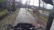 Un scooter aide cette femme à arrêter son cheval parti au galop sur cette route