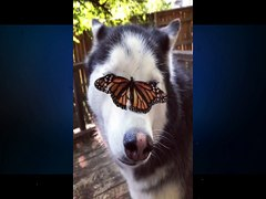 ¡Butterfly meets lovely dog