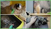MI RUTINA DIARIA REAL CON LOS ANIMALES | LO QUE HAGO CADA DÍA CON GATOS, COBAYAS, TORTUGAS Y PALOMAS