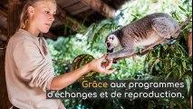 Les bébés animaux des Zoos de France
