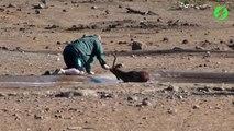 Un homme courageux vient sauver une impala coincée dans la boue