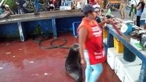 Regardez qui attend le poisson derrière cette poissonnerie :  un lion de mer et des pélicans