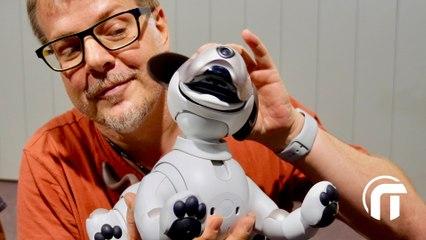 Aibo, le chien-robot, produit de niche ? (IFA2018)